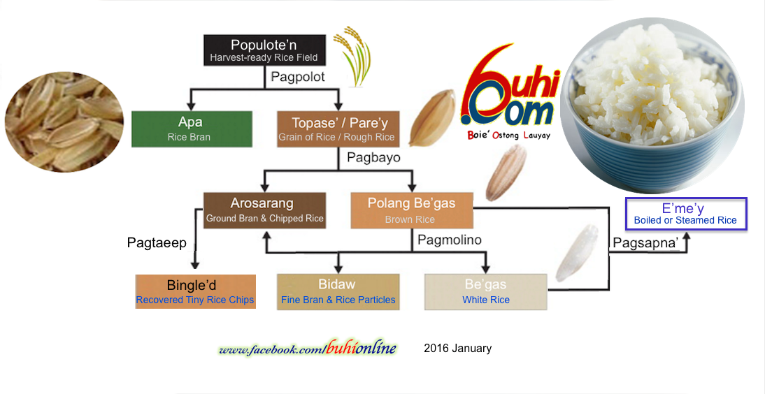Chart showing products and byproducts derived from the rice plant.